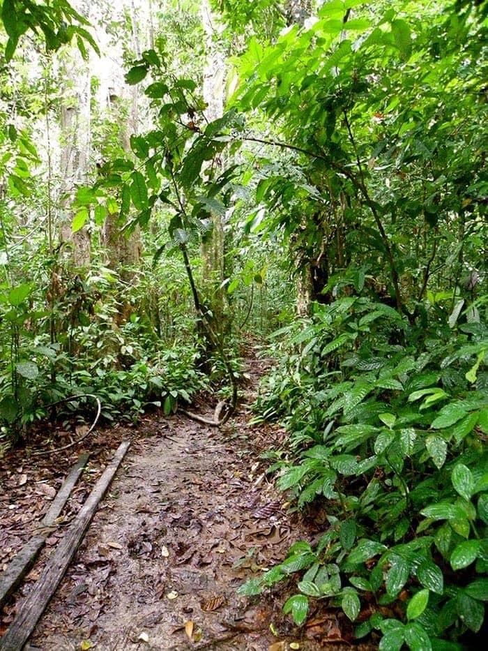 Paseo en la selva de Borneo