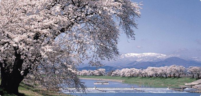 floracion-cerezos-japon