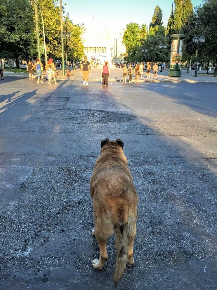 Plaza Sintagma (Parlamento Griego) Atenas